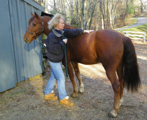 horse reiki and massage